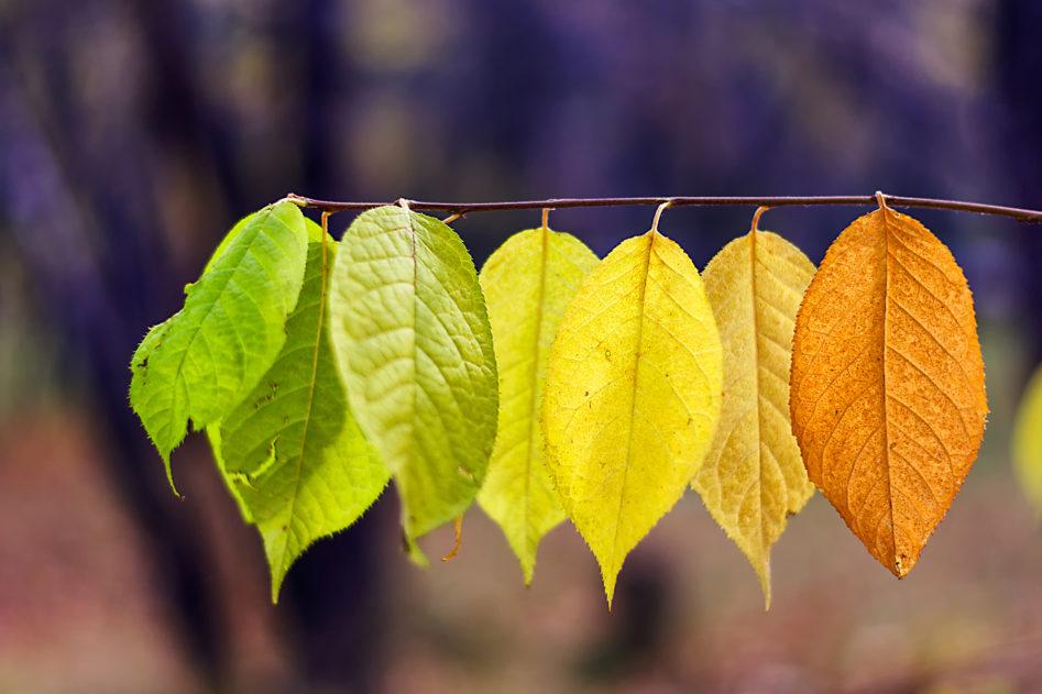 Yoga Herbstprogramm